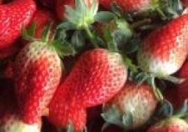 VC果园:2021大棚草莓种植前景