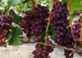 VC果园:提子皮可以吃吗?提子和葡萄有哪些区别?