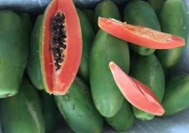 VC果园火山岩红心牛奶木瓜