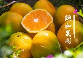VC果园好物上新-云南华溪蜜桔