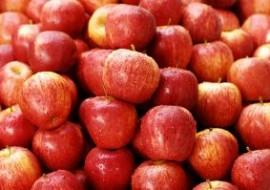 """小苹果今年景""""金果子"""""""