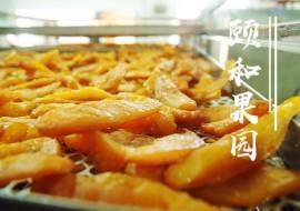 VC果园天目山小香薯枣上新啦!