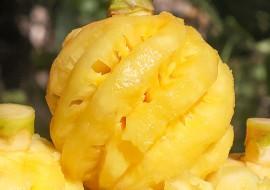 VC果园:可以当零食吃的水果——泰国小菠萝