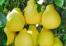 好吃又去火的柚子已经占据水果市场C位,价格却下滑