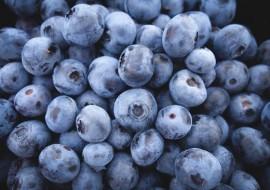 花青素高含者蓝莓带领界首农民脱贫致富