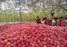 陕西省提出发展以千亿级苹果产业为重点的果业