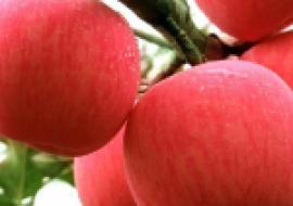 VC果园:优质高产的苹果品种介绍