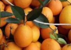 VC果园:4月份橙子价格行情预测