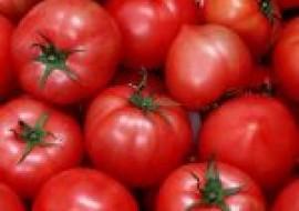 VC果园:今日西红柿多少钱一斤?2020年西红柿最新价格行情分析