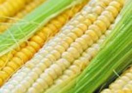 VC果园:水果玉米和糯玉米哪个减肥效果好?玉米减肥的原理是什么?