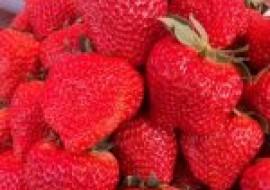 VC果园:草莓籽怎么种植方法?