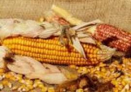 VC果园:玉米价格涨至近5年高点,后期还会涨吗?