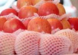 VC果园:苹果什么季节成熟?