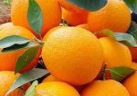 VC果园:中国最好的橙子产地是哪里?