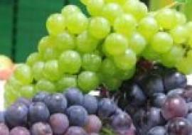 VC果园:提子和葡萄的区别有哪些?