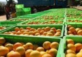 VC果园:伦晚橙子什么时候成熟?有哪些功效和作用?
