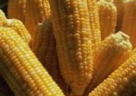 VC果园:玉米价格为何一直上涨?