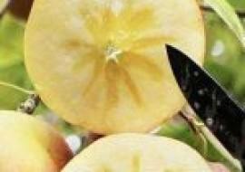 VC果园:阿克苏苹果多少钱一斤?是哪里产的?有何特点?