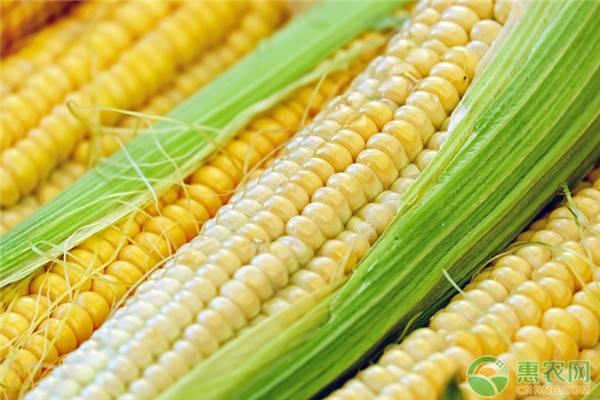 水果玉米和糯玉米哪个减肥效果好?玉米减肥的原理是什么?