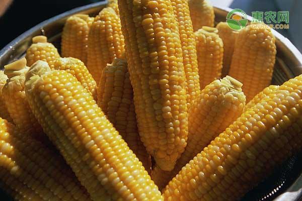 玉米价格上涨对猪肉有什么影响?