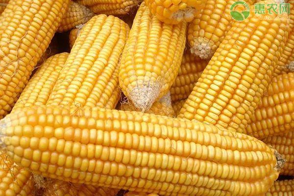 2021年玉米价格行情预测