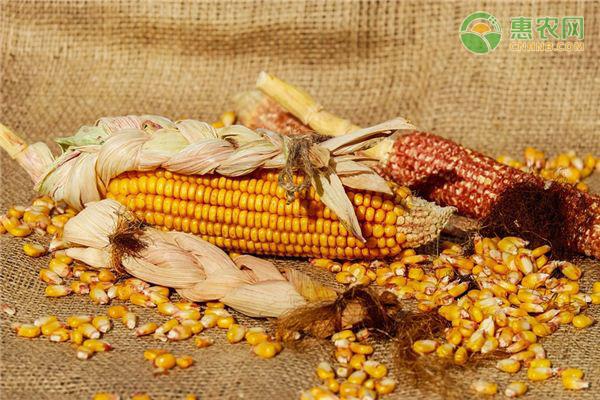 2021年四月份玉米价格行情分析